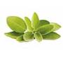 naturica-balancing-remedy-shampoo-ing1